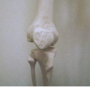 膝の構造について