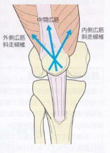膝蓋骨の動く方向