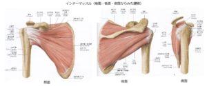 インナーマッスル(腱板)