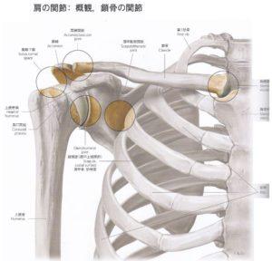 肩関節構造