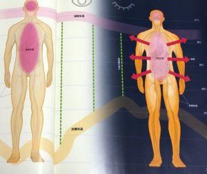 皮膚体温と深部体温