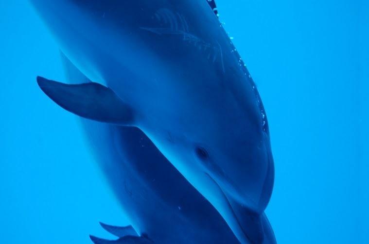 イルカ型特徴