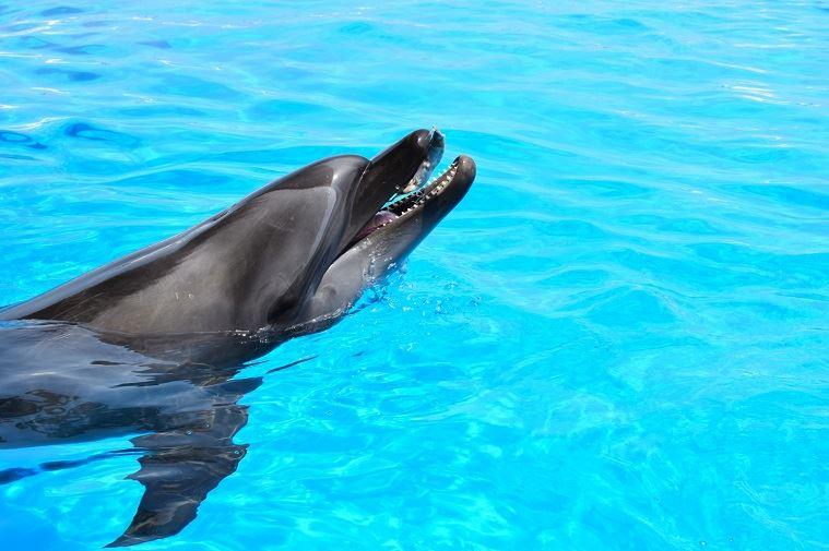 イルカ型生活習慣