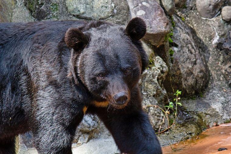 クマ型特徴