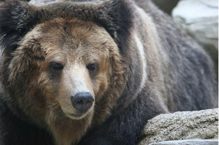 クマ型生活習慣
