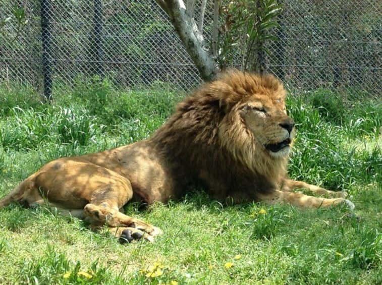 ライオン型生活習慣